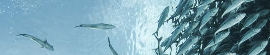 Aquakulturproduktion