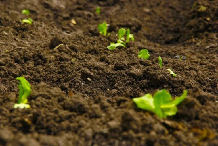 Landwirtschaftlichen Bodenanalyse